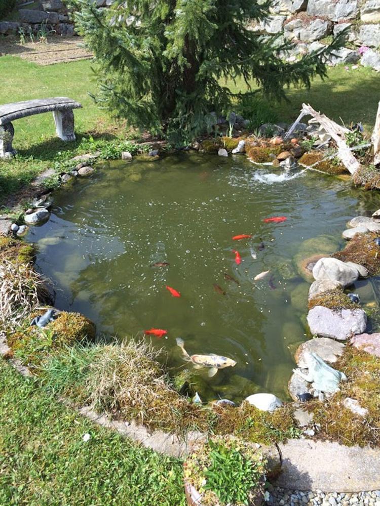 Gartenteich gewerbeunion for Kois und goldfische in einem teich
