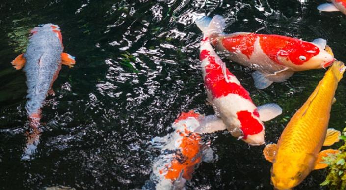 Teich gewerbeunion for Einheimische fische gartenteich