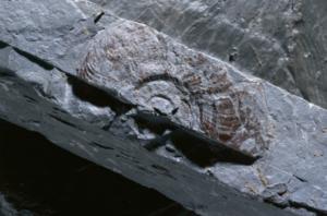 Das rund 175 Millionen Jahre alte Gestein Opalinuston ist praktisch undurchlässig und schliesst Stoffe sehr gut ein. (Foto: © Comet Photoshopping, Dieter Enz).